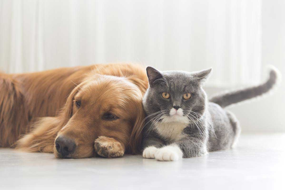about our veterinary practice  Estevan, SK SA A