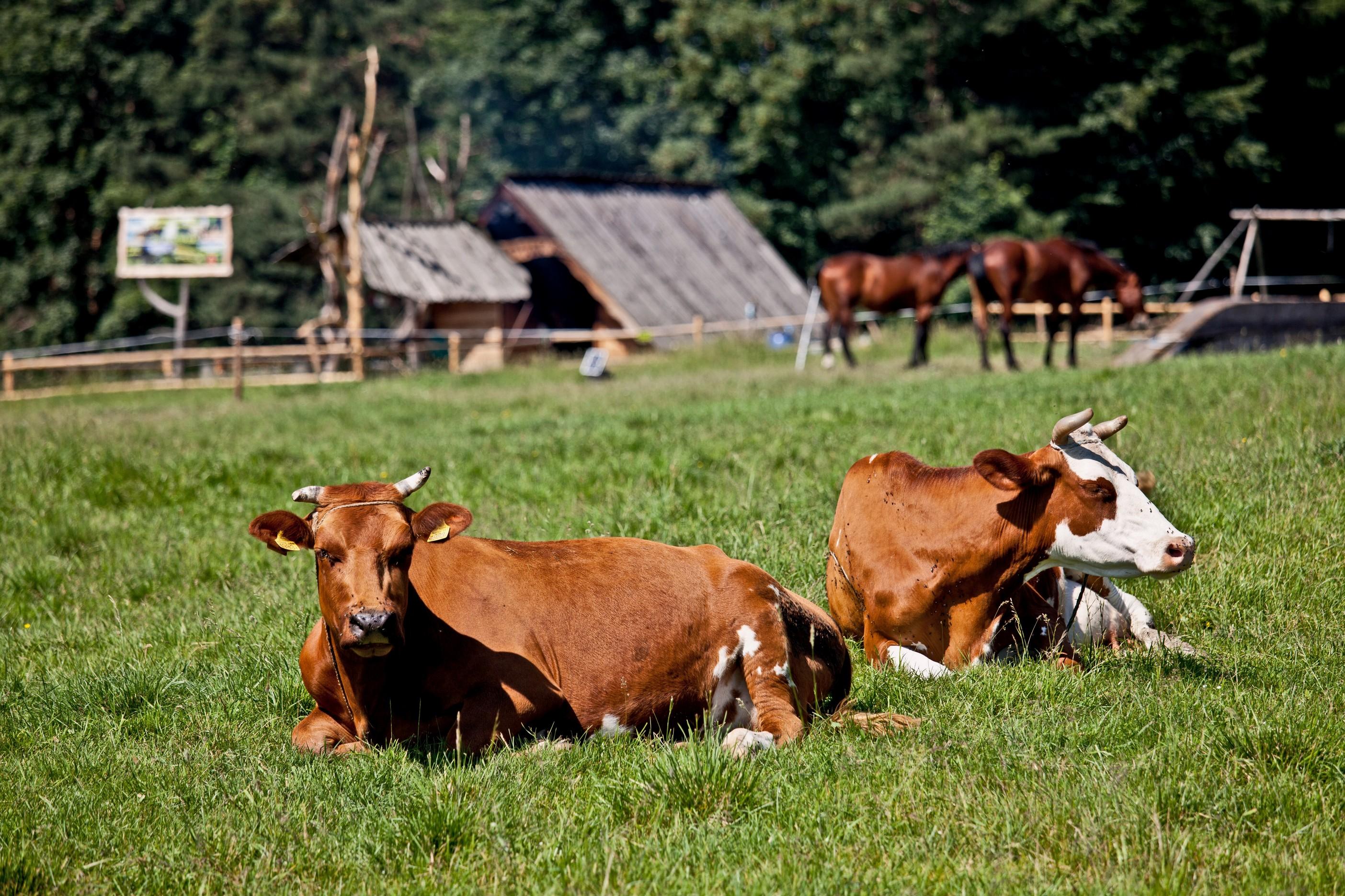 bovine services  Estevan, SK SA A