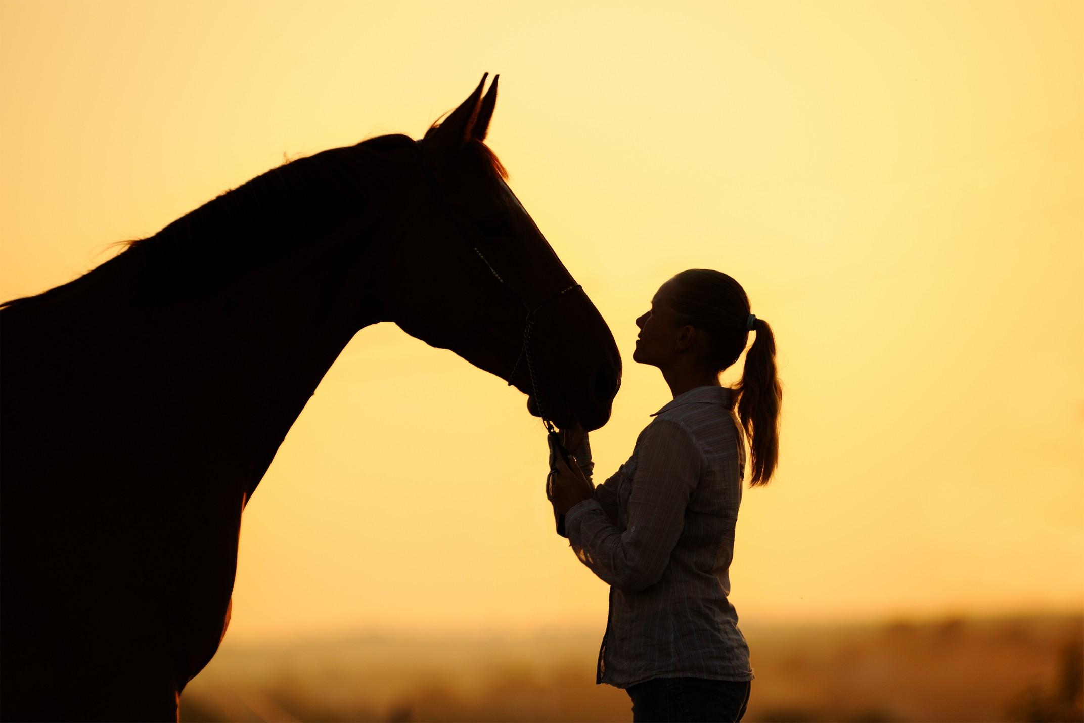 equine services  Estevan, SK SA A