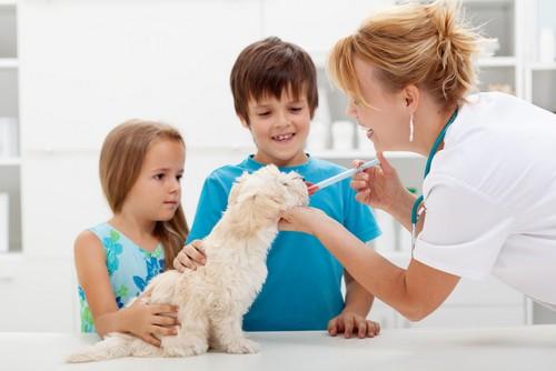 Vaccinations  Estevan, SK SA A